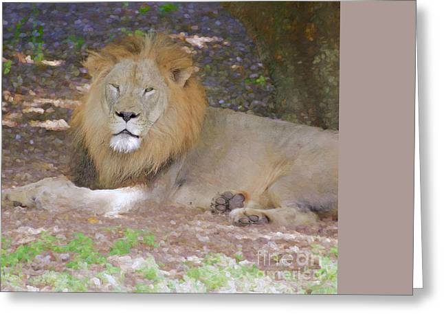 Wild Animal Greeting Cards - Shady Retreat Greeting Card by Judy Kay