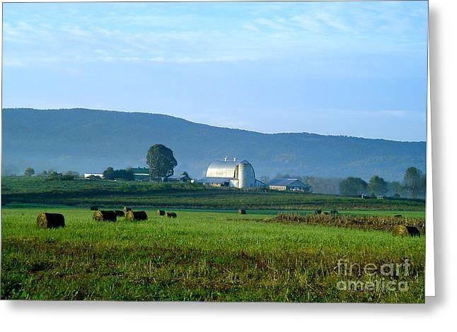 Hay Bales Greeting Cards - Shady Valley Farm Greeting Card by Annlynn Ward