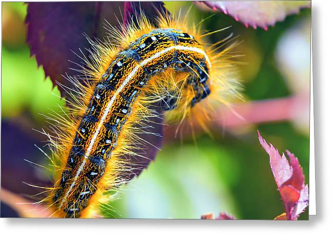 Crawl Greeting Cards - Shagerpillar Greeting Card by Bill Tiepelman