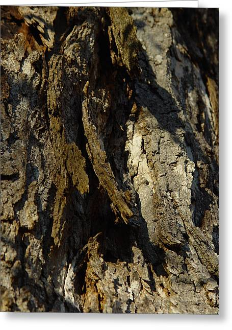 Cummington Greeting Cards - Shaggy Bark Greeting Card by Rosemary Wessel