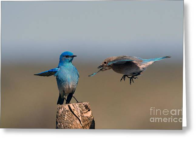 Bluebird Greeting Cards - Share My Post Greeting Card by Mike Dawson