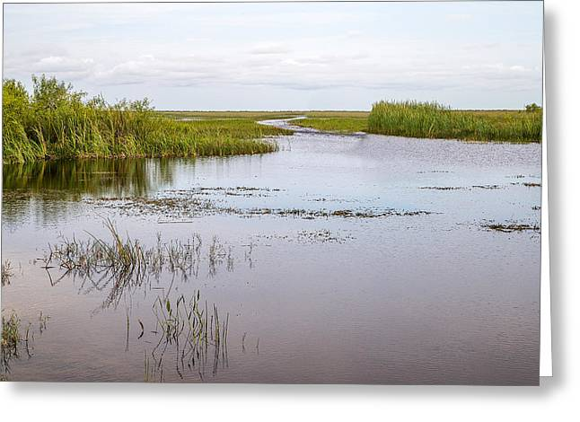 Shark River Slough - 9 Greeting Card by Rudy Umans
