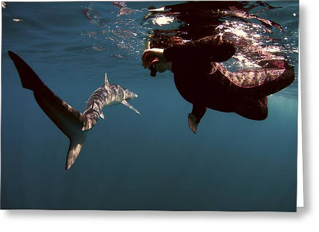 Dangrous Greeting Cards - Shark Swim By Greeting Card by Greg Amptman