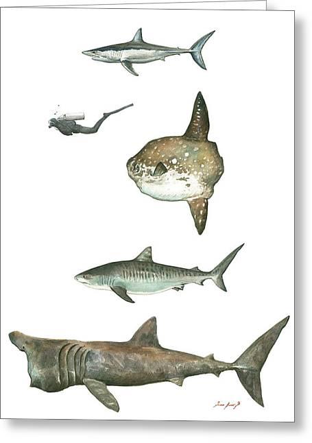 Sharks And Mola Mola Greeting Card by Juan Bosco
