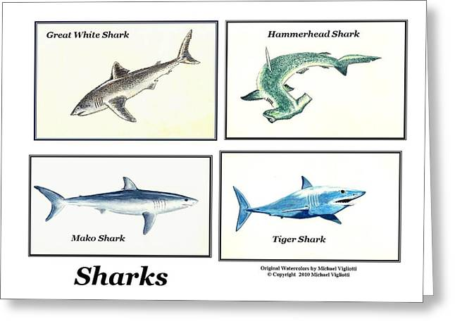 White Shark Drawings Greeting Cards - Sharks Collage Greeting Card by Michael Vigliotti