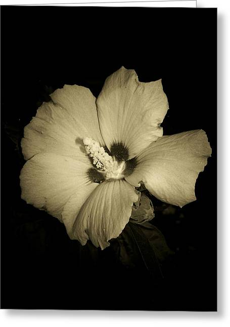 Rose Of Sharon Greeting Cards - Sharons Rose Greeting Card by Trish Tritz