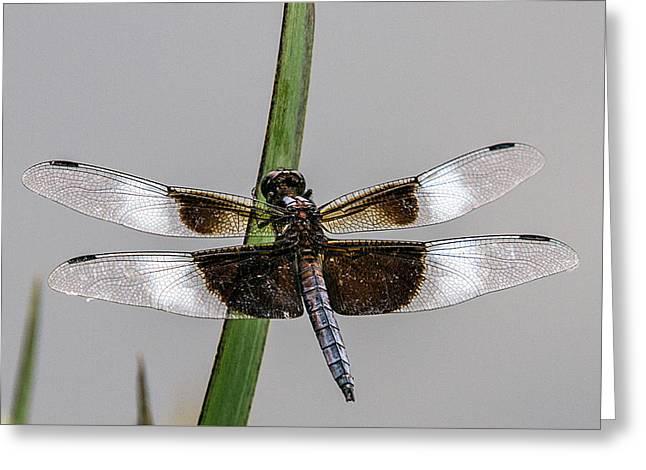 Sharp Focus Dragonfly Greeting Card by John Haldane