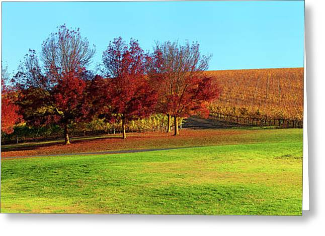 Shaw And Smith Winery Greeting Card by Bill Robinson
