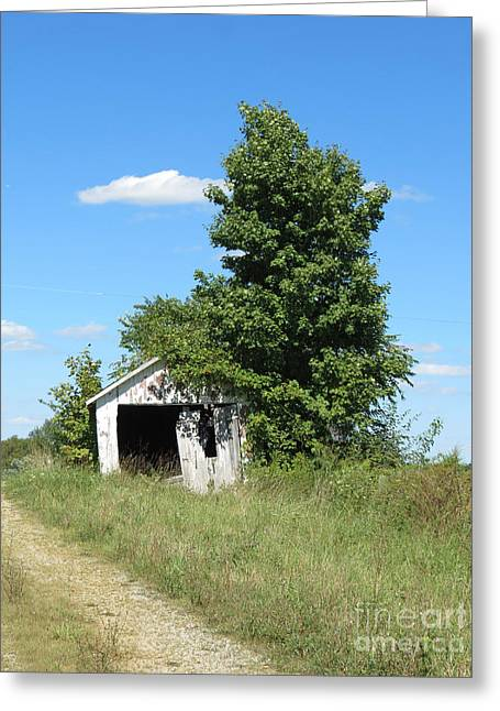 Sheds Greeting Cards - Shed and Tree Greeting Card by Alan Crabtree