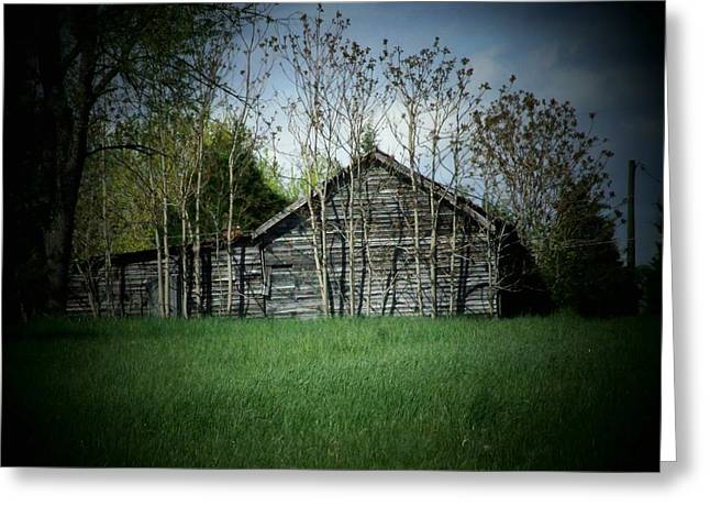Shed Greeting Cards - Shed and Trees Greeting Card by Michael L Kimble