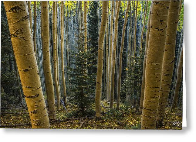 Coconino National Forest Greeting Cards - Shedding Greeting Card by Peter Coskun