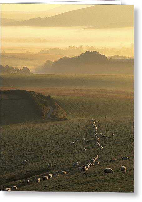 Mchugh Greeting Cards - Sheep and misty South Downs Greeting Card by Malc McHugh