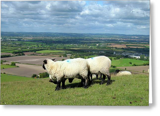 Sheep At Westbury Tor Greeting Card by Kurt Van Wagner