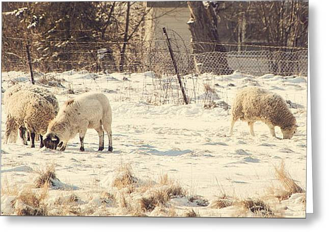 Snow Scene Landscape Greeting Cards - Sheep Grazing in Winter Greeting Card by Janice Van Dijk