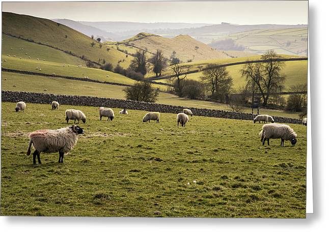 Peak District National Park Greeting Cards - Sheep in landscape in Peak District in Spring UK Greeting Card by Matthew Gibson