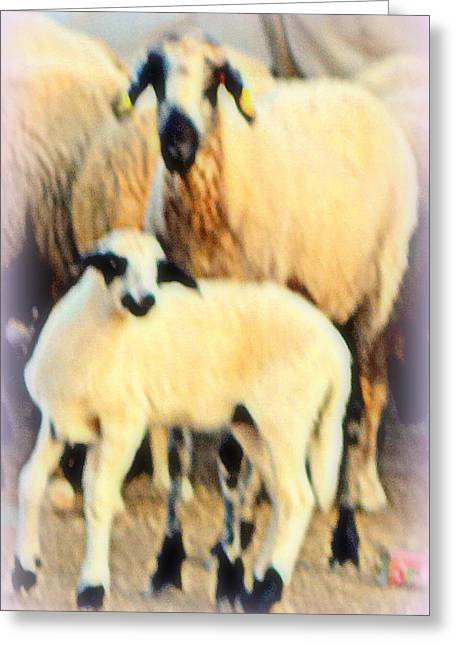 Oxytocin Greeting Cards - Sheep K  Greeting Card by Hilde Widerberg