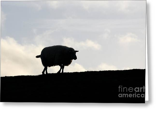 Comic Strip Greeting Cards - Sheep on the dike Greeting Card by Jana Behr