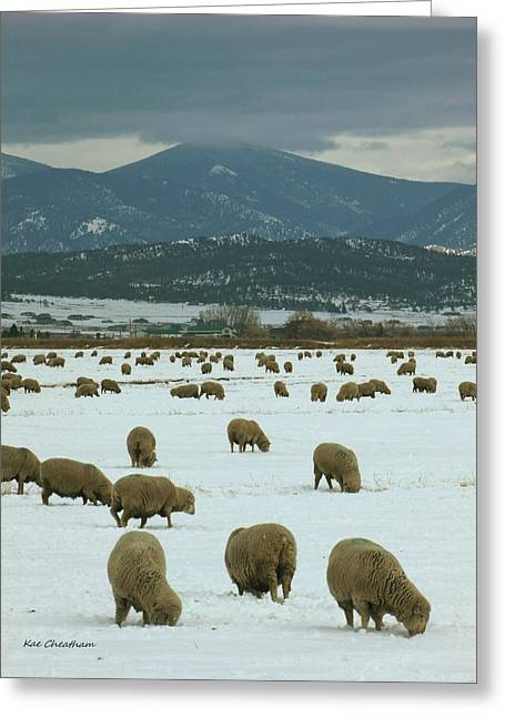 Grazing Snow Greeting Cards - Sheep on Winter Field Greeting Card by Kae Cheatham
