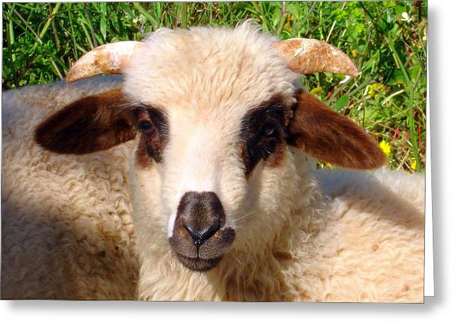 Naivety Greeting Cards - Sheep Portrait Close Up  Greeting Card by Tracey Harrington-Simpson