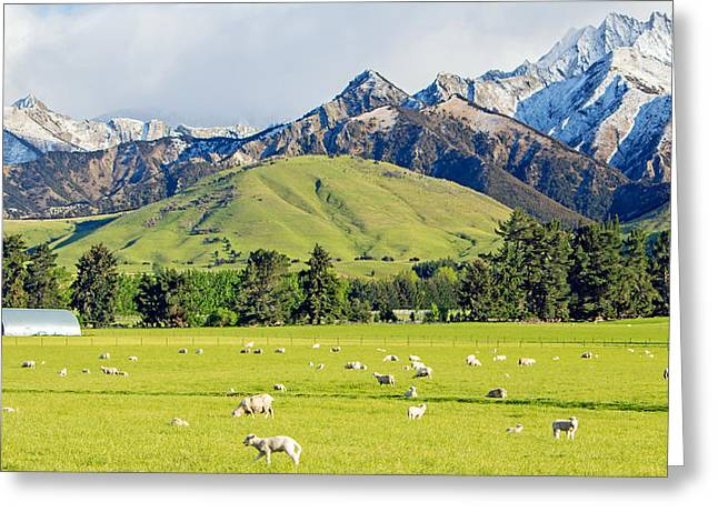 Grazing Snow Greeting Cards - Sheep Station Greeting Card by Nicholas Blackwell