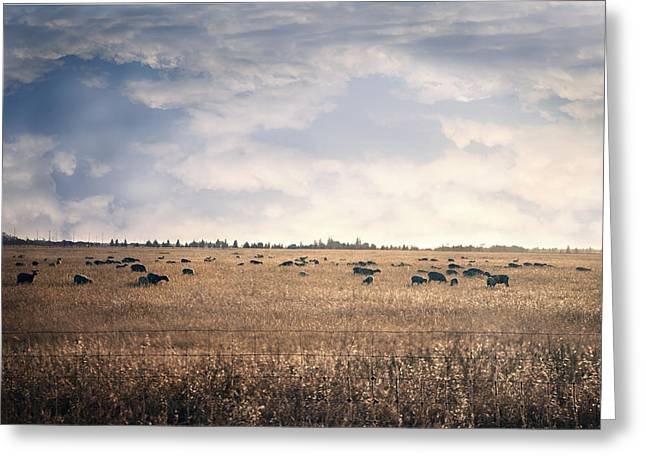 Electric Sheep Greeting Cards - Sheep Sunset Greeting Card by Ash Robinson