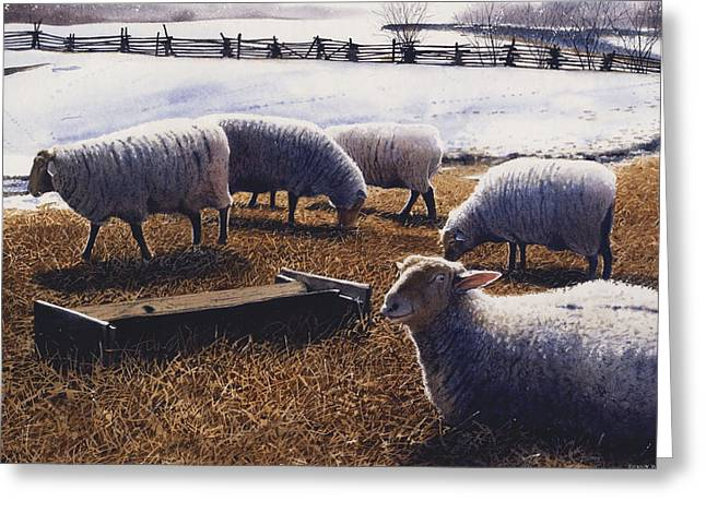 Winter Photos Paintings Greeting Cards - Sheepish Greeting Card by Denny Bond