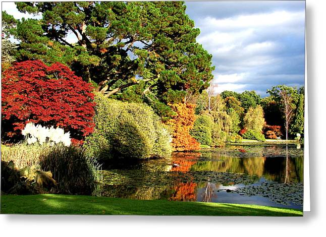 Nicola Butt Greeting Cards - Sheffield Park Greeting Card by Nicola Butt