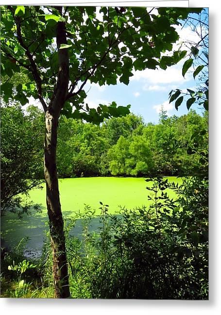Algae Greeting Cards - Sheldon Marsh Algae Pond Greeting Card by Shawna  Rowe
