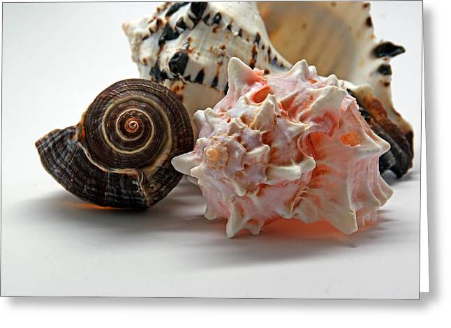 Shell Texture Greeting Cards - Shell Grouping Greeting Card by Lynda Lehmann