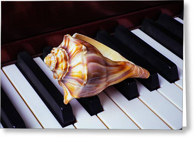 Shell On Piano Keys Greeting Card by Garry Gay