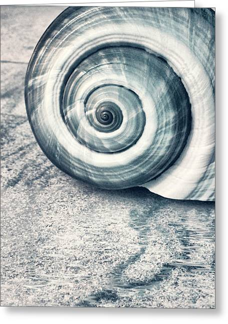 Shell Digital Greeting Cards - Shell Greeting Card by Photodream Art