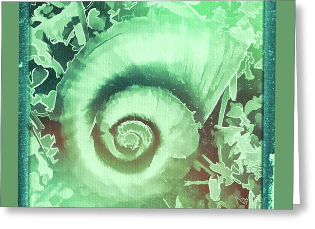 Shell Series 2 Greeting Card by Marvin Spates