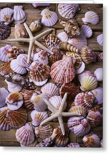 Exotic Photographs Greeting Cards - Shell Starfish Collection Greeting Card by Garry Gay