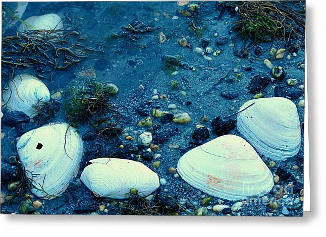 Original Art Photographs Greeting Cards - Shells Greeting Card by Colleen Kammerer