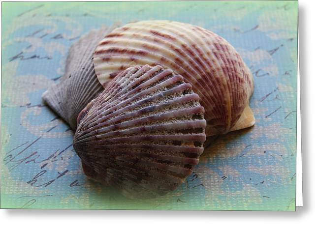 Shell Texture Greeting Cards - Shells Greeting Card by Diane Reed