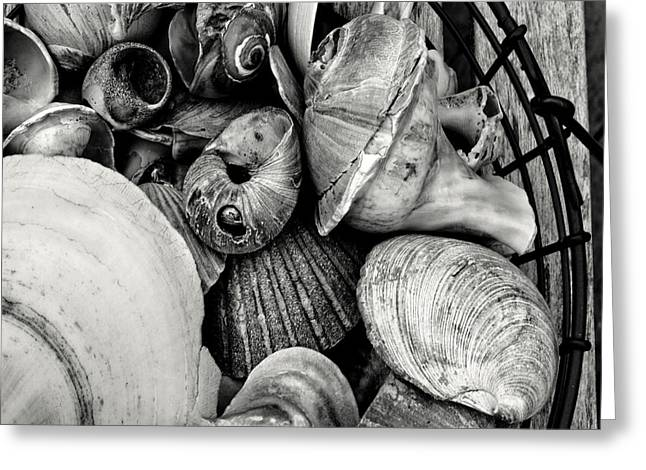 Shell Texture Greeting Cards - Shells In A Basket Greeting Card by John Hoesly