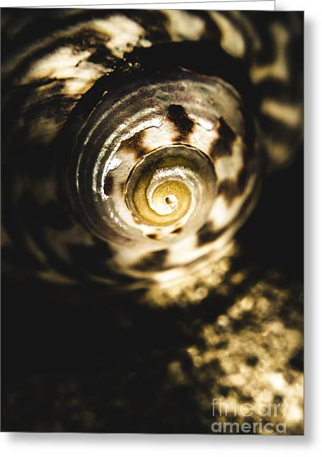 Shells In Detail Greeting Card by Jorgo Photography - Wall Art Gallery