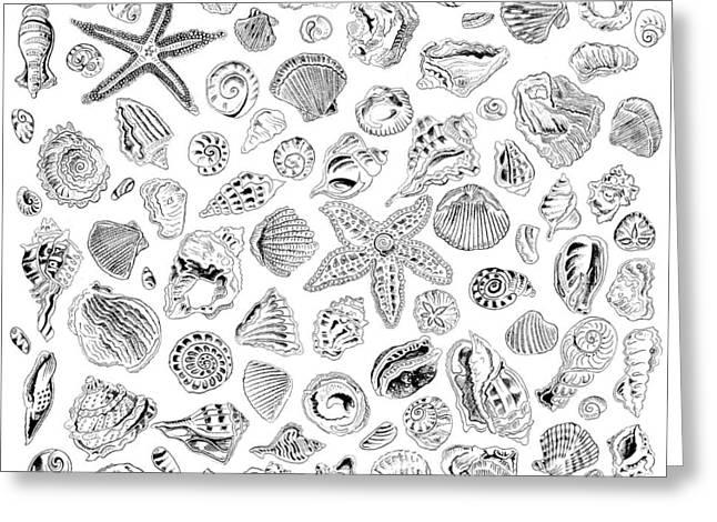 Shells Greeting Card by John Keaton