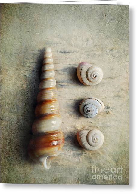 Shell Collecting Greeting Cards - Shells on beach wood Greeting Card by Lyn Randle