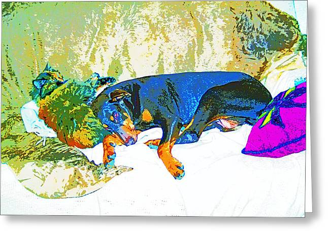 Dogs Digital Greeting Cards - Shelly and Toby 1 Sleeping Together Image Greeting Card by Paul Price