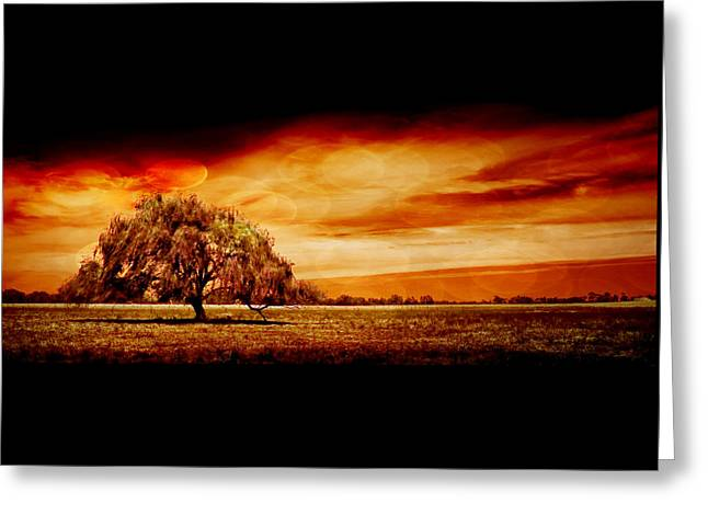 Country Scenes Greeting Cards - Shelter Greeting Card by Az Jackson