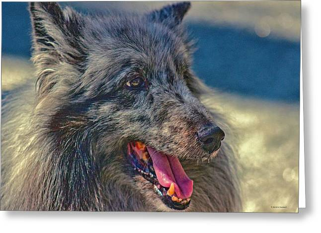Working Dog Greeting Cards - Sheltie Greeting Card by Dennis  Baswell
