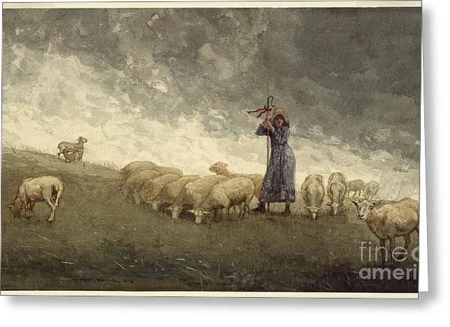 Tending Sheep Greeting Cards - Shepherdess Tending Sheep Greeting Card by MotionAge Designs