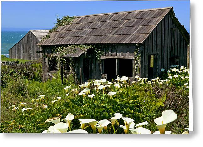 Wooden Structures Greeting Cards - Shepherss shack Greeting Card by Garry Gay