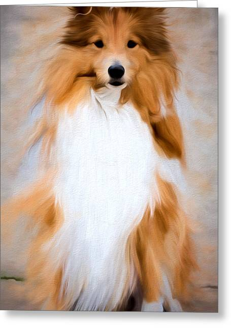 Dogs Digital Greeting Cards - SHETLAND SHEEPDOG - Sheltie Greeting Card by EricaMaxine  Price