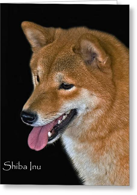 Inu Greeting Cards - Shiba Inu Greeting Card by Larry Linton