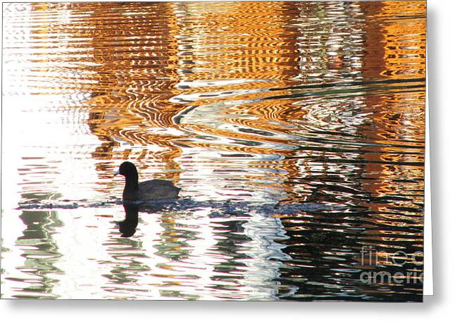 Sea Animals Greeting Cards - Shimmering Golden Pond Greeting Card by Sharon Nelson-Bianco