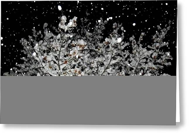 Flash Greeting Cards - Shimmering Snowfall Greeting Card by Will Borden