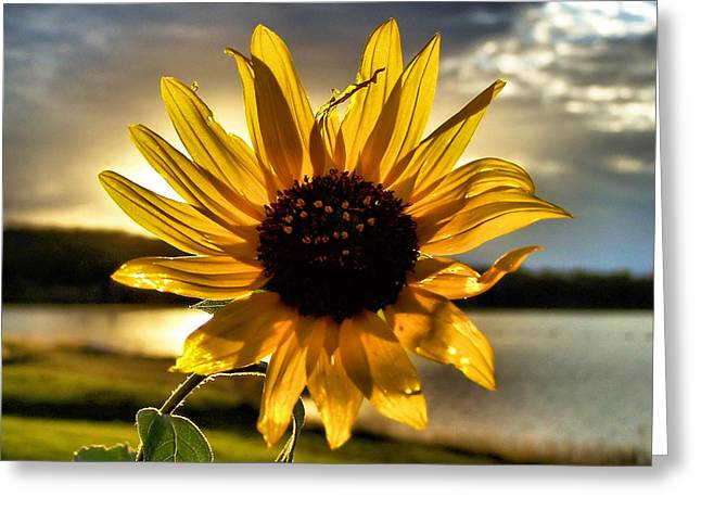 Shine Down Greeting Card by Karen M Scovill