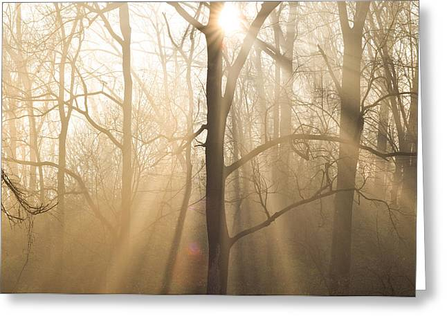 Bill Cannon Photography Greeting Cards - Shine on Through Greeting Card by Bill Cannon